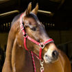 Picture of Head Collar & Lead Rope